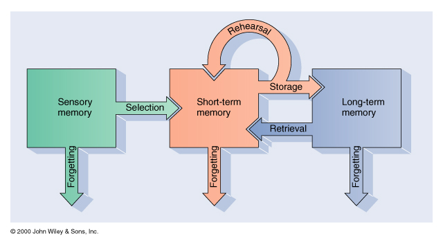 short term memory the second stage in Stored over intermediate time scales of seconds, minutes or hours by short-term memory elements, represented by units (zk) at the neural level (fig 1a), stm appears to be an intermediate step between neuron activity and ltm within single neurons or simple circuits at the system level (fig 1b), two brain structures have.